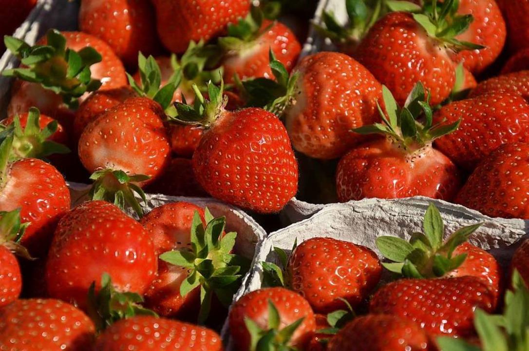 In wenigen Wochen werden die ersten Erdbeeren reif sein.    Foto: Gabriele Hennicke