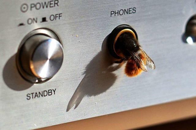 Diese Biene klettert in eine Kopfhörerbuchse