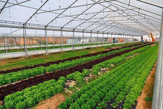 Die Direktvermarkter im Raum Weil erleben einen Run auf heimisches Gemüse