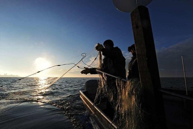 Berufsfischer am Bodensee fordern Fischzuchtverbot