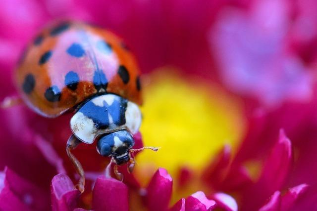 Kann man an den Punkten von Marienkäfern erkennen, wie alt sie sind?
