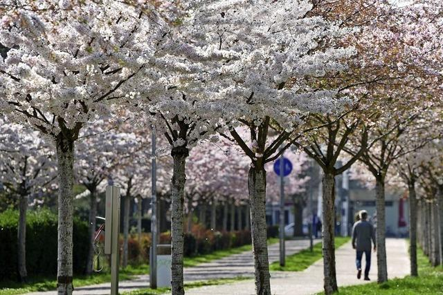 Der Weg in den Frühling