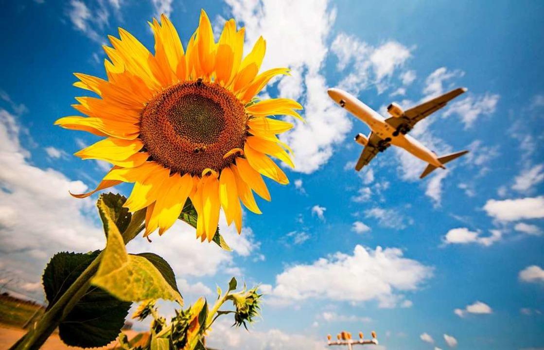 Nach der Krise werden viele Menschen e...#8211; und wieder ins Flugzeug steigen    Foto: Christoph Schmidt