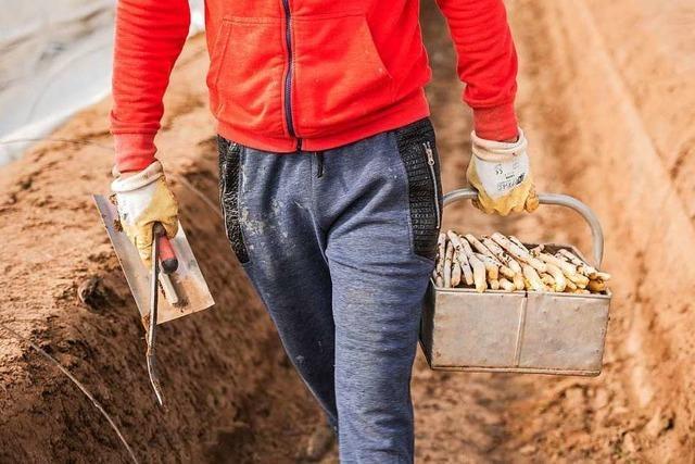 Erzeugergroßmarkt in Niederrotweil könnte wegen der Corona-Krise Marktanteile verlieren