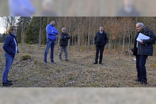Unter 40 Bäumen sollen bald Urnen beigesetzt werden können