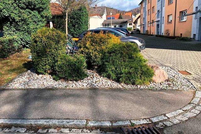 Gärtner verwandeln in Grenzach-Wyhlen Steinbeete in blühende Flächen