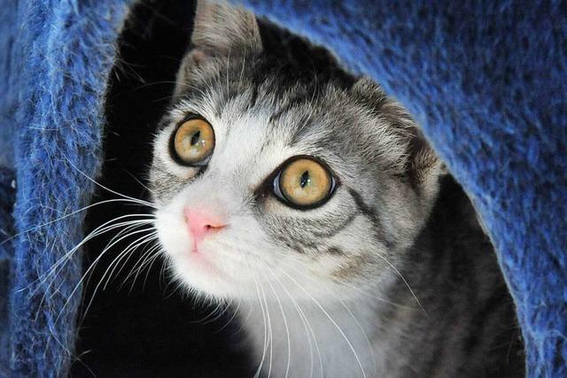 Tierschutzverein Markgräflerland fürchtet, dass viele Haustiere abgegeben werden