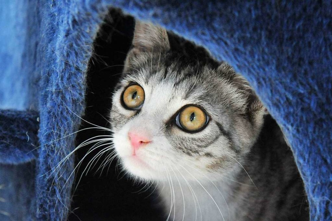 Das Katzenhaus ist aus Sicherheitsgründen geschlossen.  | Foto: Martin Schutt
