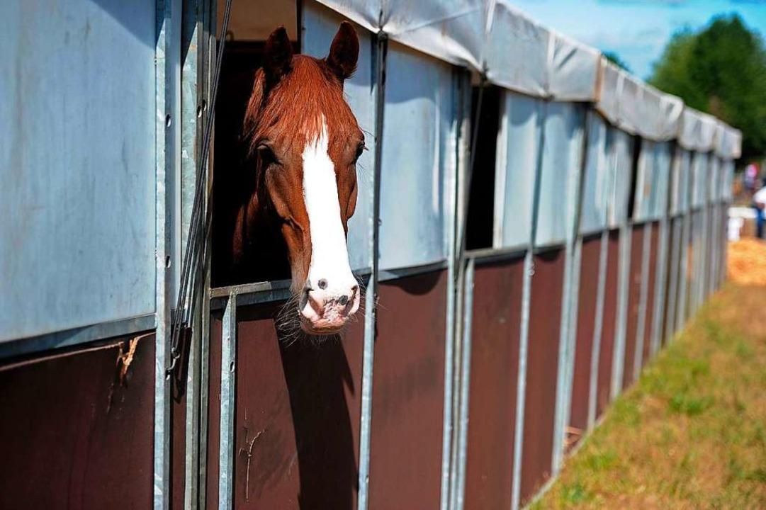 Es gibt klare Vorschriften, wie mit Pferden in der Krise umzugehen ist.  | Foto: Bettina Schaller