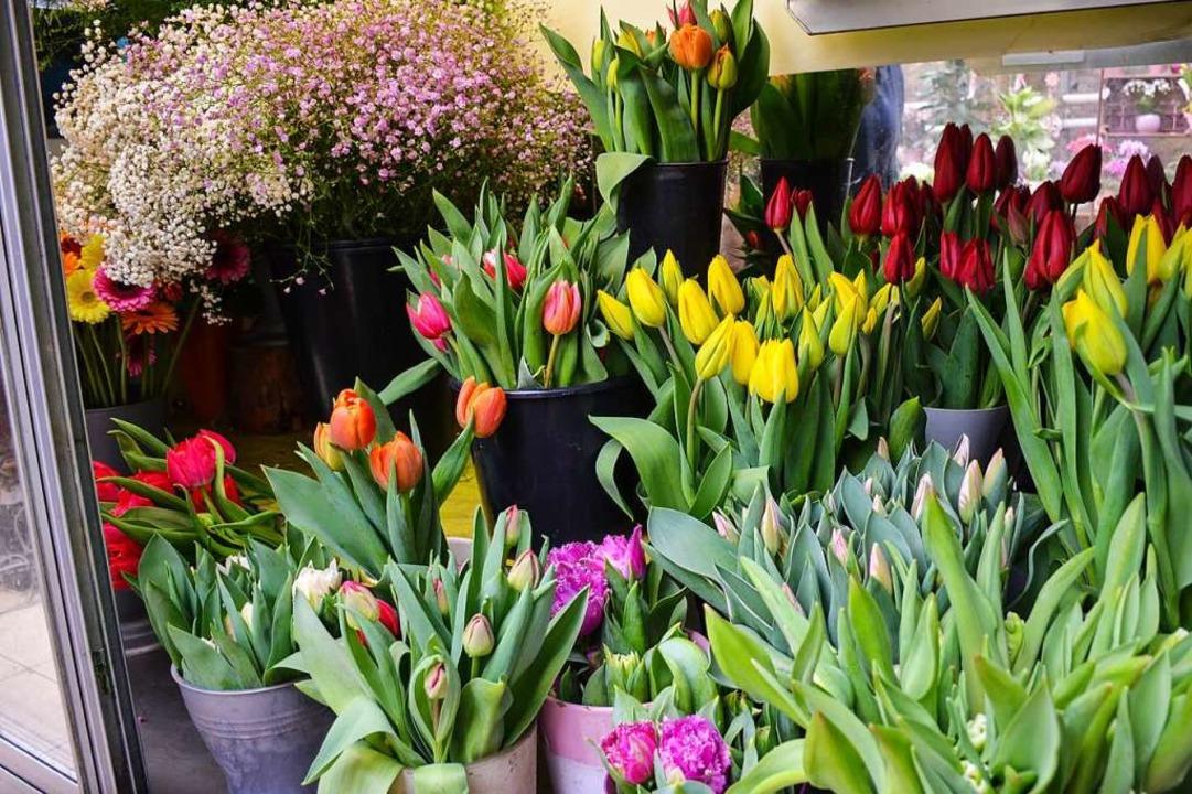 Bunte Tulpen    Foto: Gabriele Hennicke