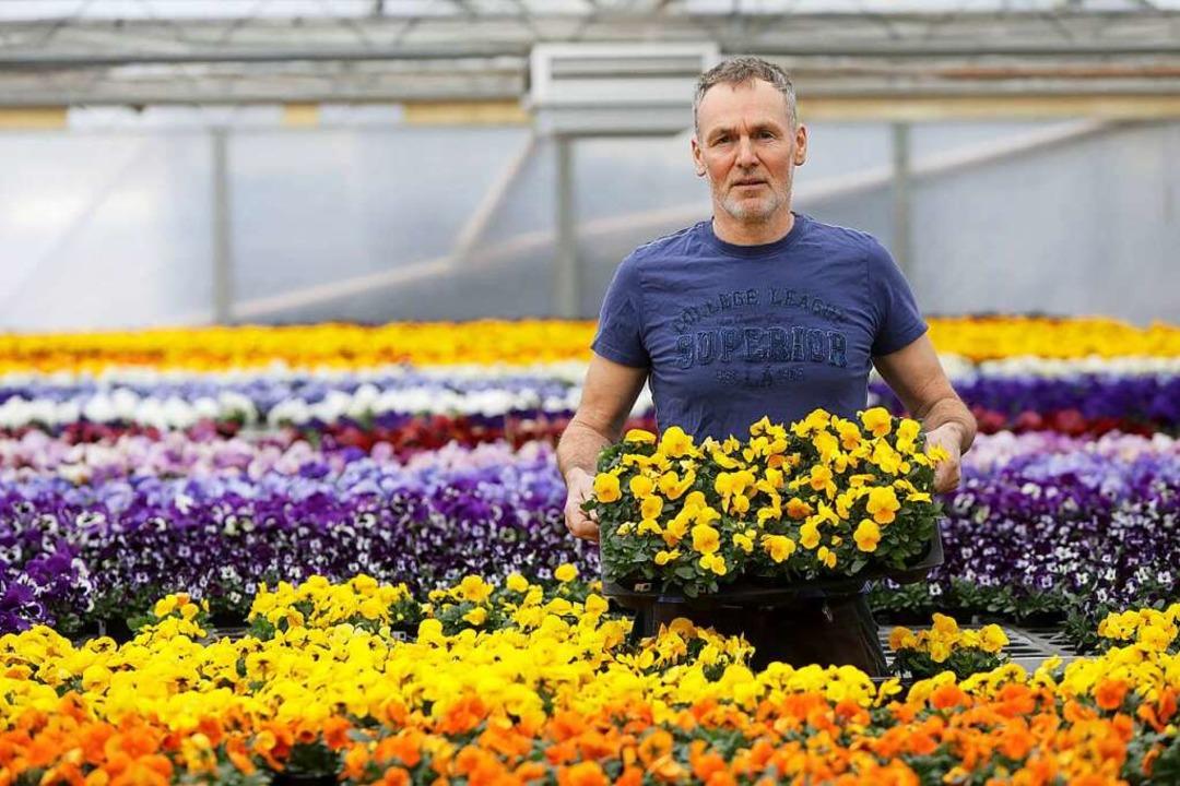 Der selbständige Gärtnermeister Michae...orona-Krise auf 50000 Pflanzen sitzen.  | Foto: Christoph Breithaupt