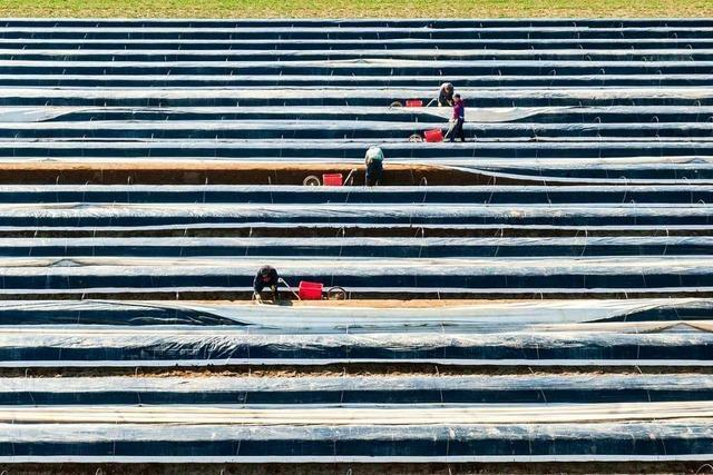 Landwirte in Südbaden suchen dringend Erntehelfer