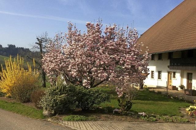 Freude am Frühling