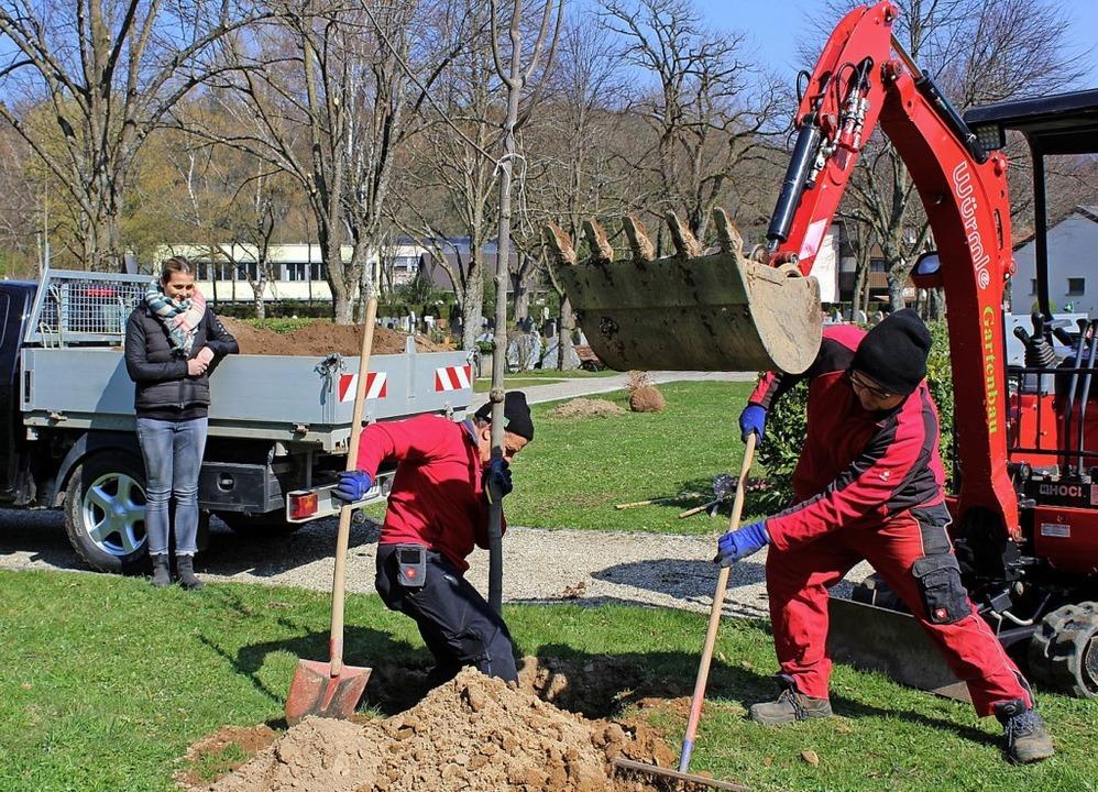 In Stegen wurden Bäume auf dem Friedhof gepflanzt.   | Foto: Erich Krieger