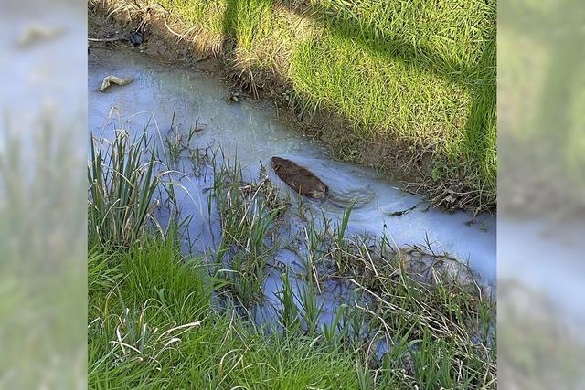 Verunreinigung im Marbachgraben