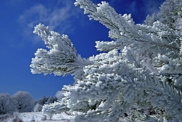 Letzte Winterimpressionen