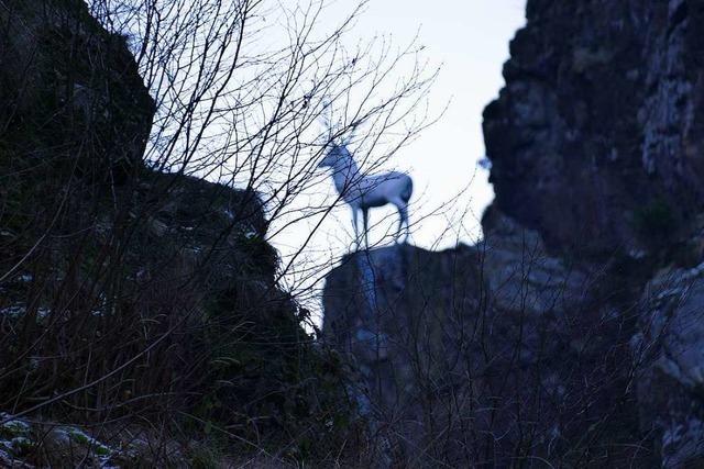 Autofahrer kollidiert nach Ausweichmanöver beim Hirschsprung mit einer Felswand