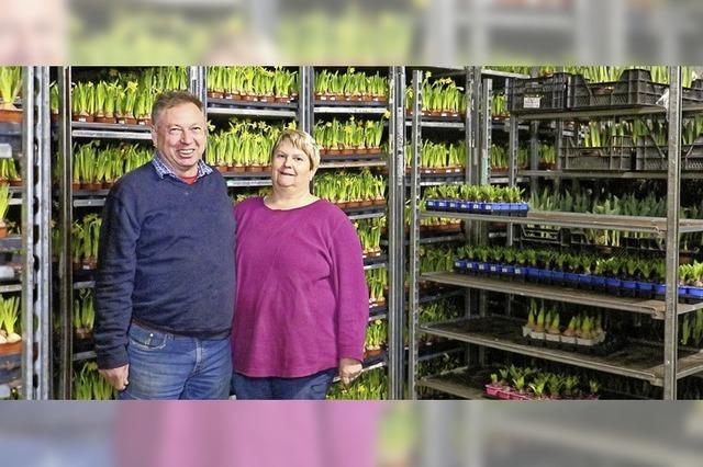 50 000 Blumen für Pflegeheime und Gemeinden