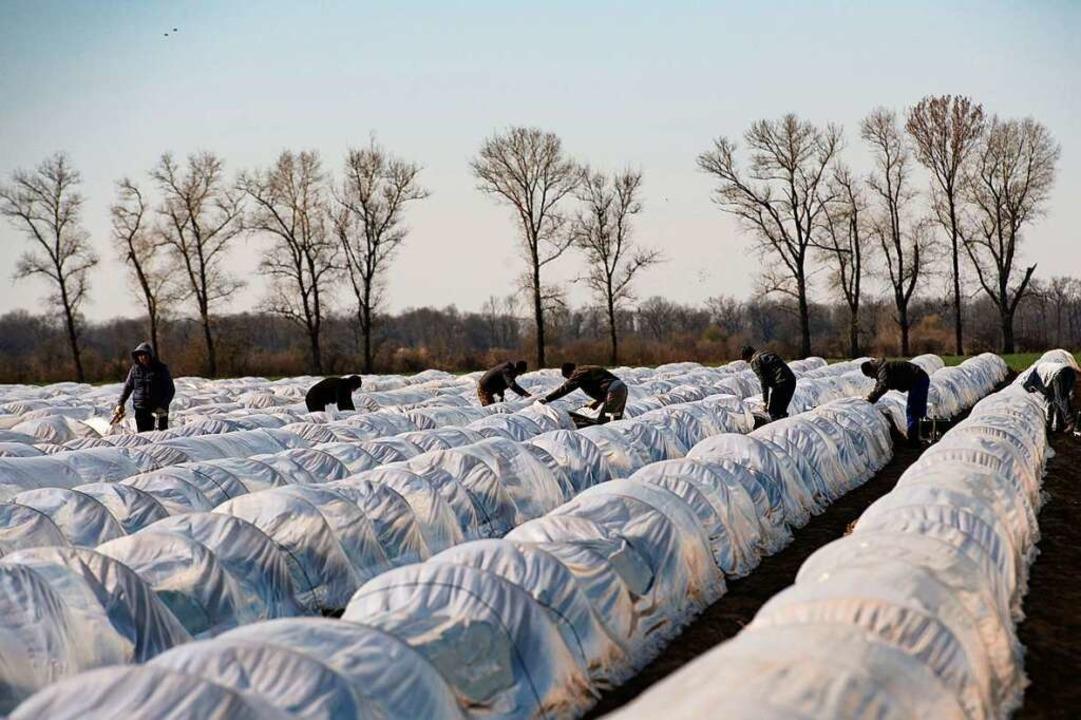 Landwirtschaftsministerium und Innenmi... nach Deutschland einreisen zu lassen.  | Foto: Paul Zinken (dpa)