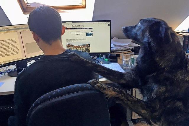 Tierische Assistenten und besorgte Kinder