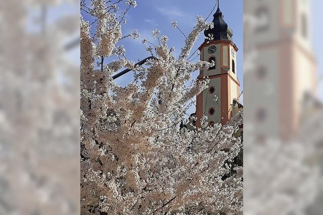 Blütenpracht in Altdorf