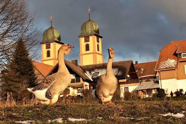 Gänsemarsch vor der Klosterkirche in St. Märgen