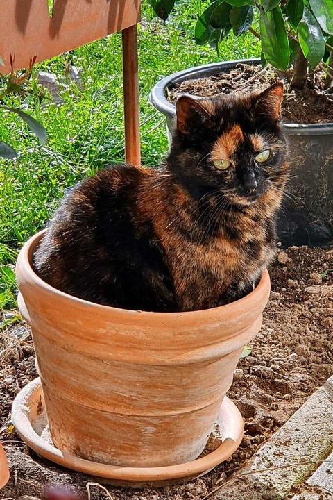 Polly, Karl Kovacs' Katze, sorgt für Erheiterung.    Foto: Karl Kovacs