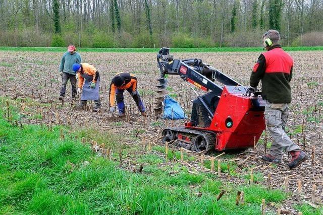 Freiburger Forstamt pflanzt 23.000 Setzlinge im Stadtwald