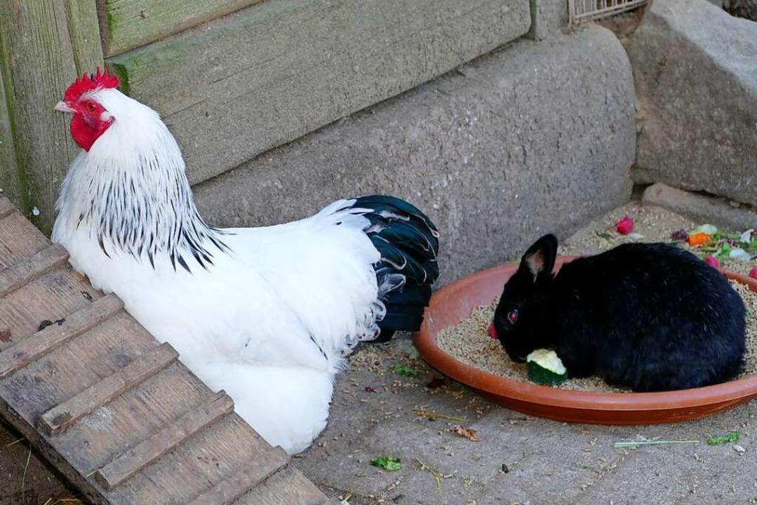 Der Osterhase wartet auf Eier...    Foto: Sylvia Sredniawa