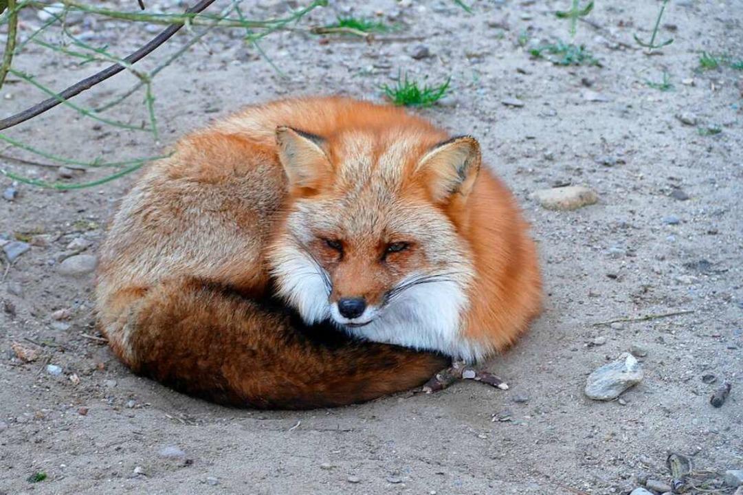 Neugierig betrachten die Tiere die Bes...n ja sonst nur die Tierpfleger vorbei.    Foto: Sylvia Sredniawa