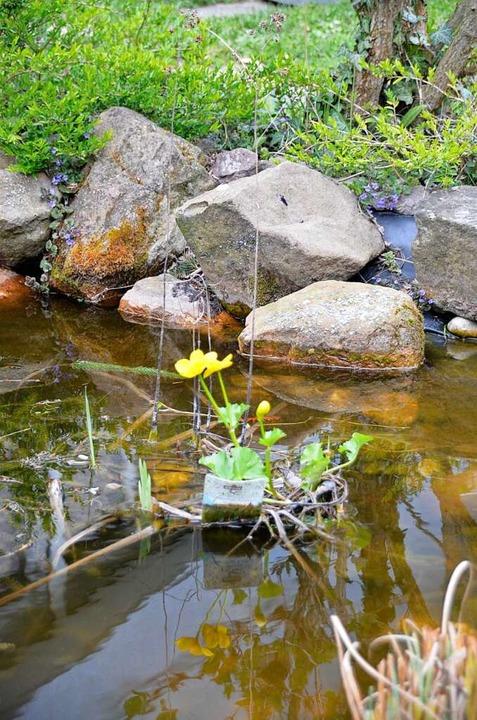Farbtupfer im Teich  | Foto: hrö
