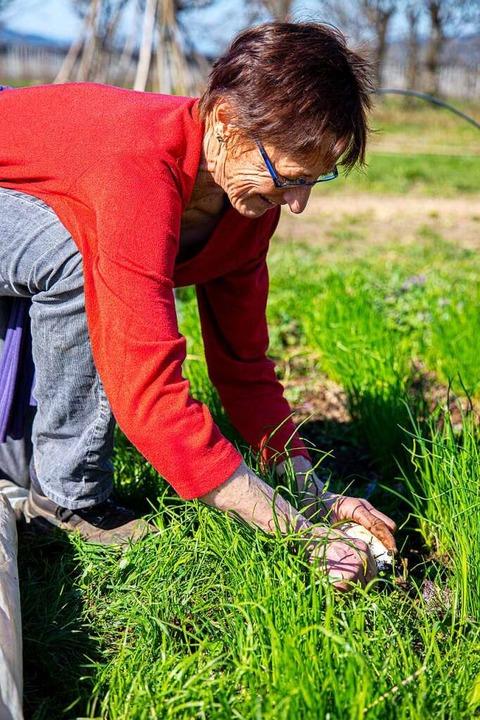 Renate Seider bei der Arbeit   | Foto: Joss Andres