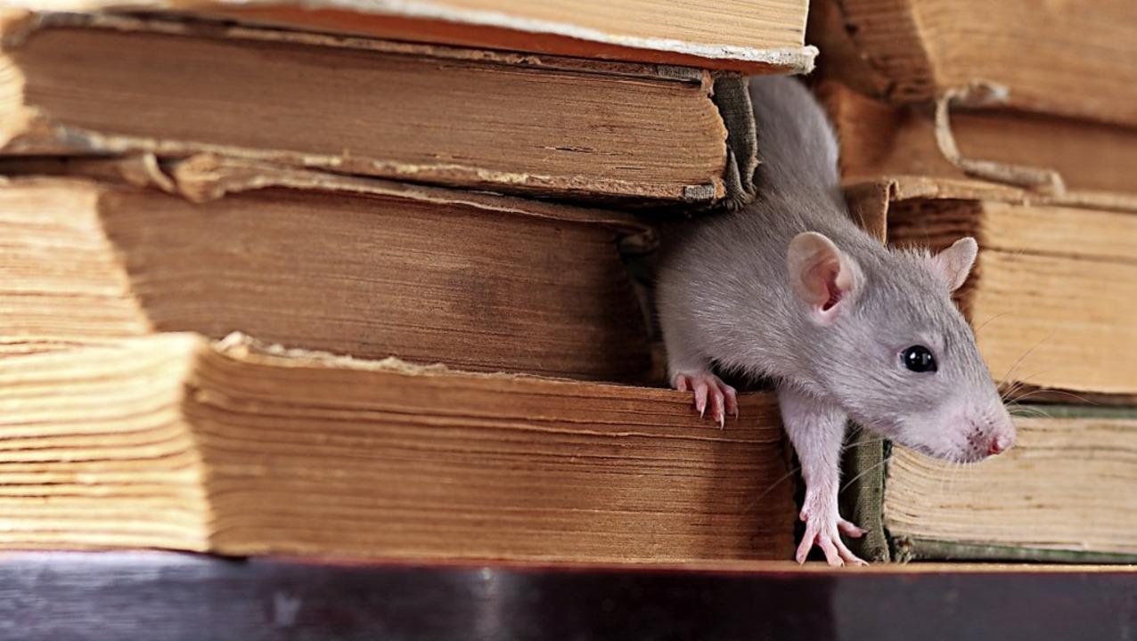 Eine Ratte zwischen alten Büchern. Das...le spielten, war lange nicht bekannt.     Foto: stock.adobe.com