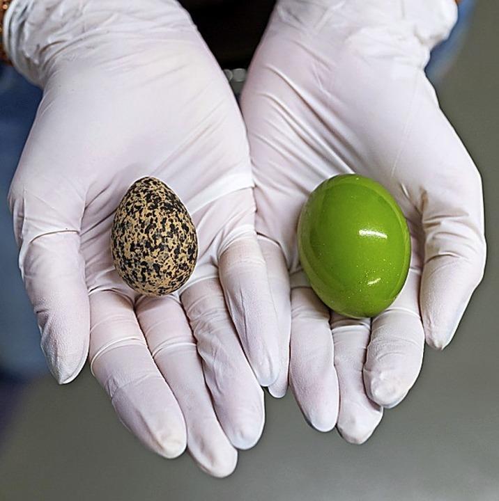 Wie lackiert: das knallgrüne Ei des Schopftinamu (rechts)    Foto: Philipp Schulze (dpa)
