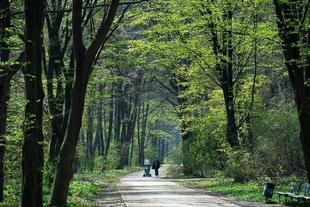 Derzeit ist in den Wäldern viel los – auch wegen Forstarbeiten