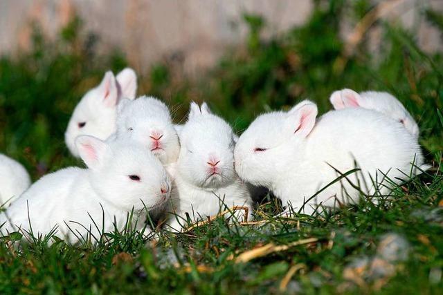 Tierische Freude zum Osterfest