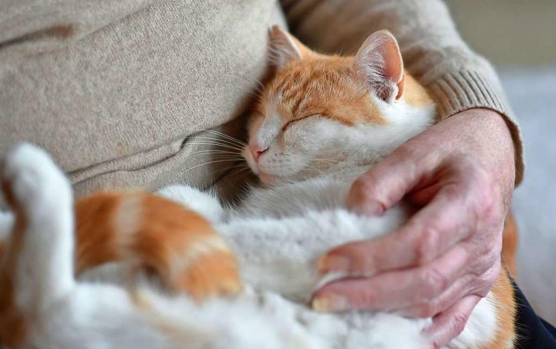 Übertragungen von Menschen auf Katzen sind möglich.  | Foto: Angelika Warmuth (dpa)