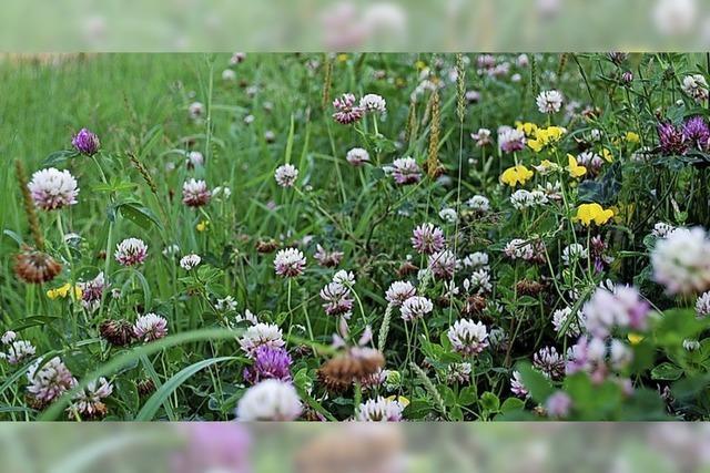 Fürs Bienenglück