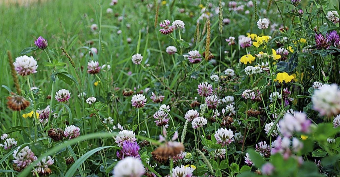Wo es summt und brummt: Blühwiese   | Foto: Pixabay
