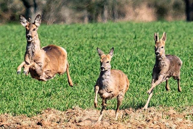 Die Maulburger Jäger rufen dazu auf, im Wald die Wege nicht zu verlassen