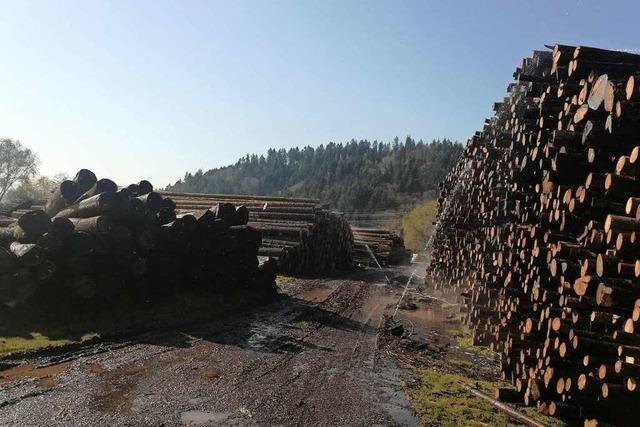 Auch der Holzmarkt leidet unter der Corona-Krise