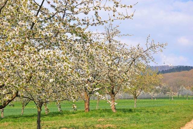 Im Eggenertal stehen die Bäume schon jetzt in voller Blüte