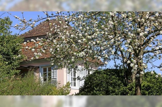 Apfelblüte im Prinzengarten