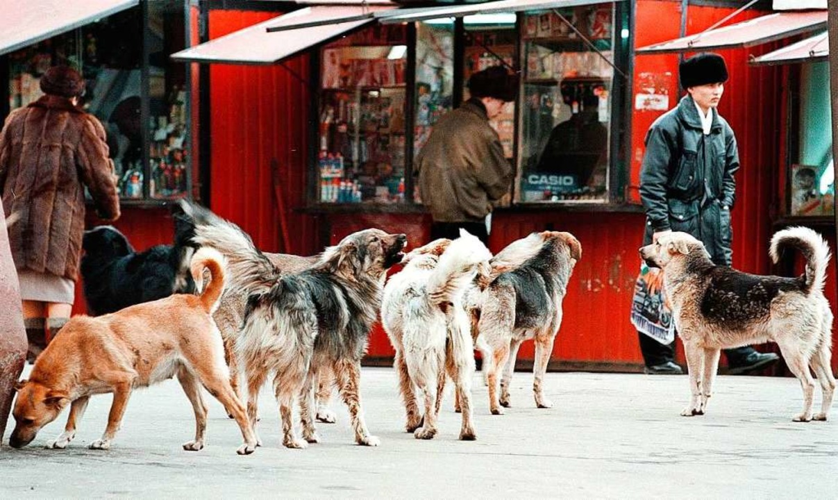 Hundeleben auf der Straße  | Foto: Vladimir_Mashatin