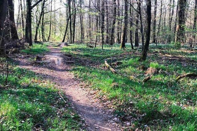Unbekannte haben bei Rümmingen einen Single-Trail angelegt