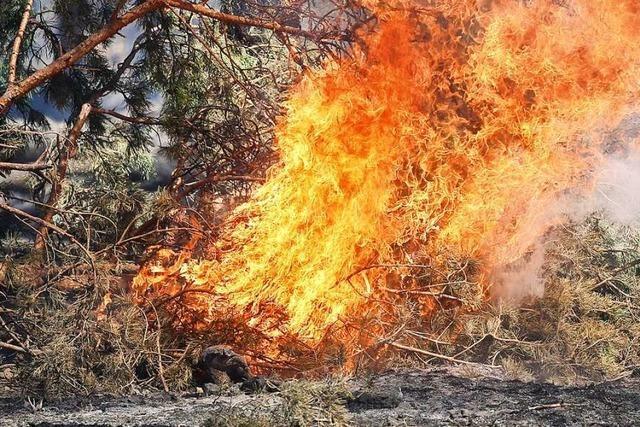 Feuerwehr löscht Flächenbrand in einem Waldstück in Grenzach-Wyhlen