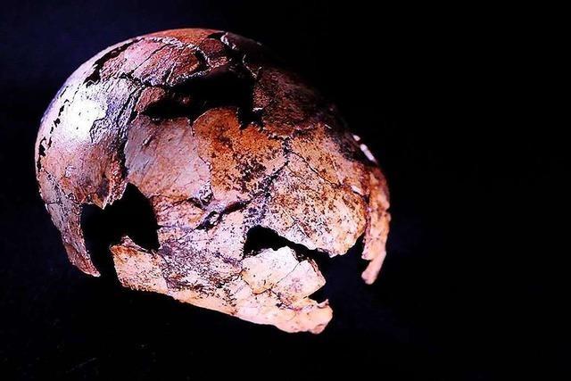 Forscher bergen zwei Millionen Jahre alte Relikte des Homo erectus