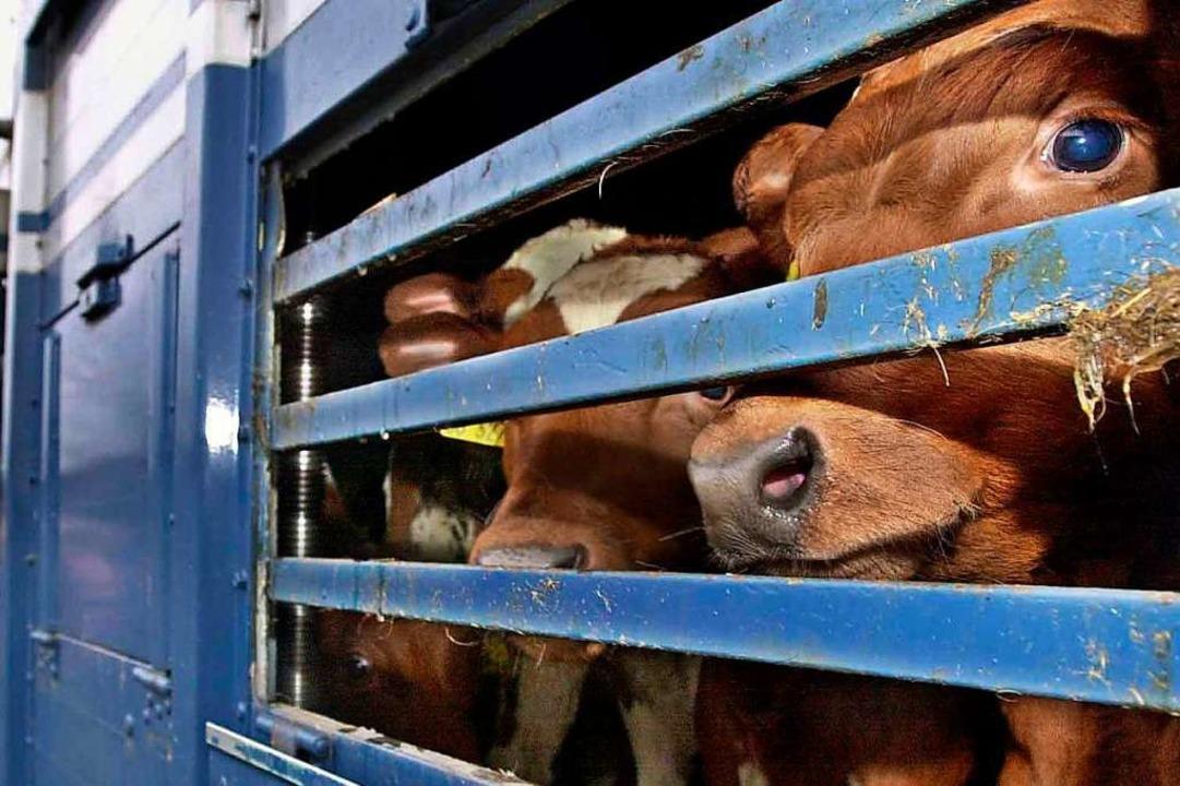 Beim Transport von Tieren werden regel...enden Tierschutzbestimmungen entdeckt.    Foto: Ulrich Perrey (dpa)