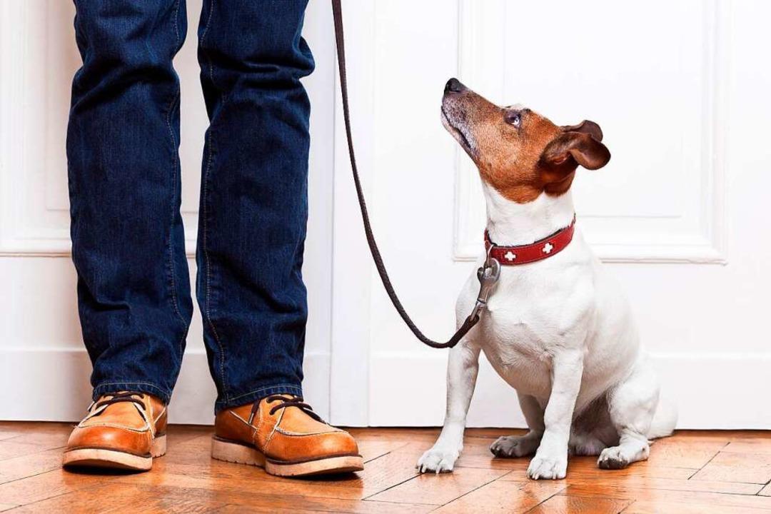 Auch ein Hund braucht etwas Privatsphä...– das sollten Menschen beachten.  | Foto: f