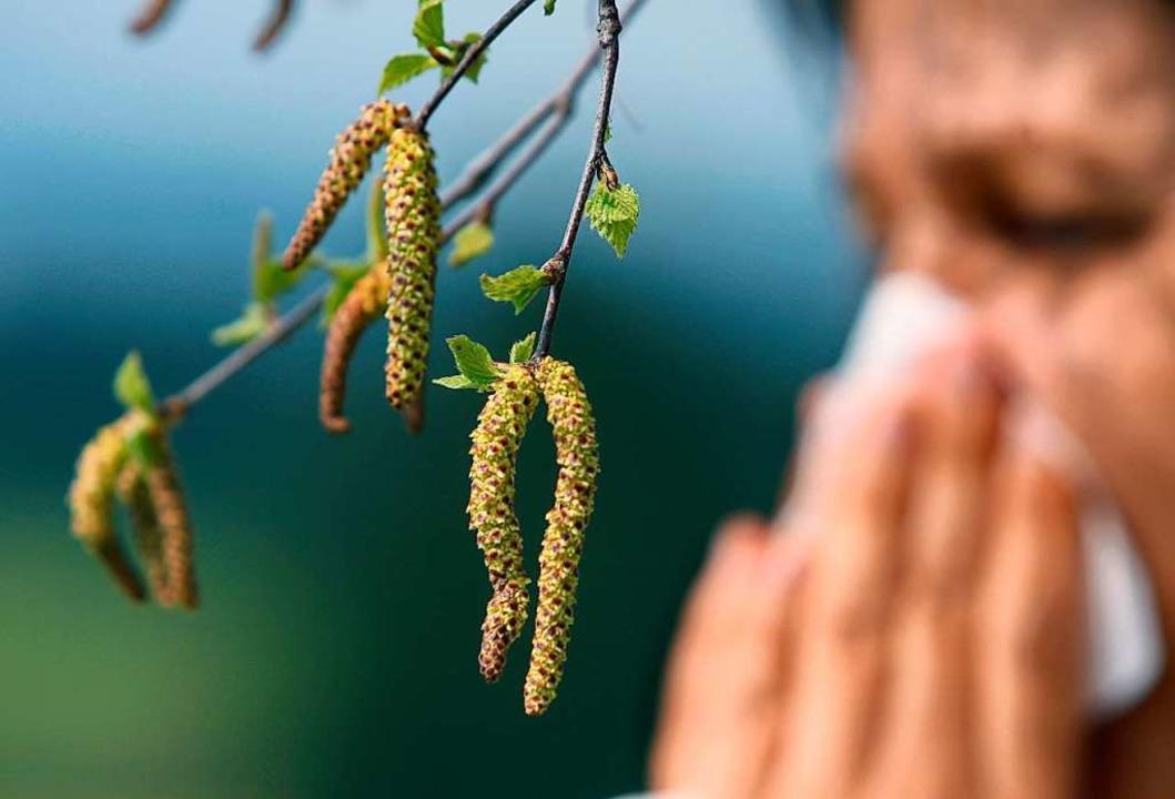 Die Birkenblüte sorgt derzeit bei Allergikern für laufende Nasen (Symbolbild).  | Foto: Karl-Josef Hildenbrand